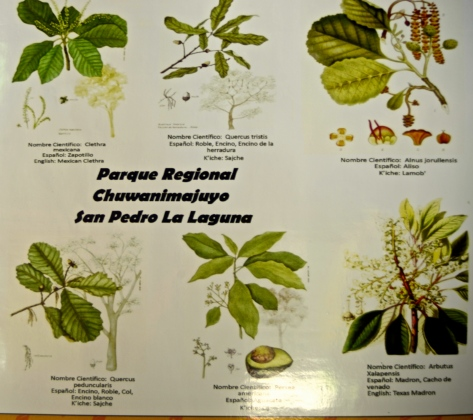 Medicinal plants you can find in the forest around San Pedro