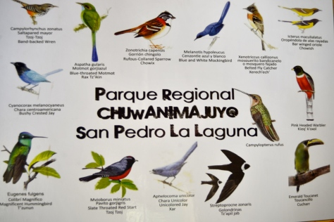 A wide varieties of birds surround Lake Atitlán