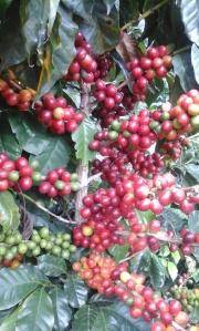 cafe[1]