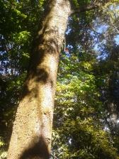 Dsifrutando of nature.